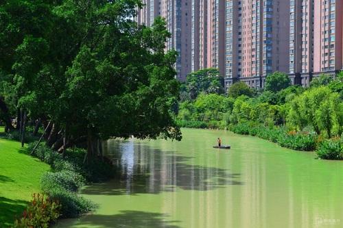 流花溪:飛花逐流水